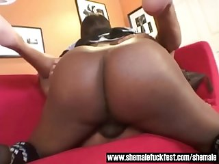 Black shemale with a bbc dominates a bald hunk shemale fuck fest