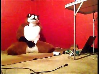 Foxy having some Fun period